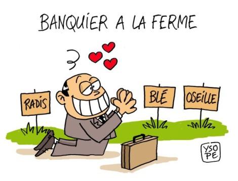 Banquier-ferme_Ysope