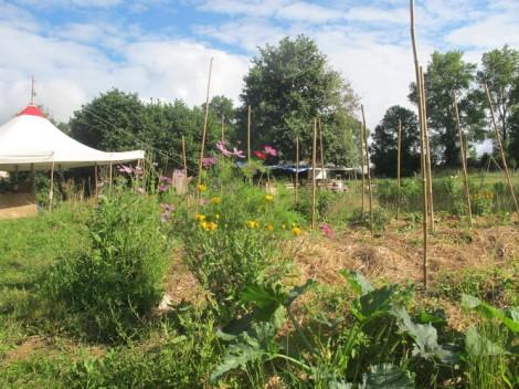 jardin_chap