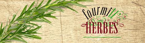 Fourmill-herbe Aurore Dauly vente de plantes